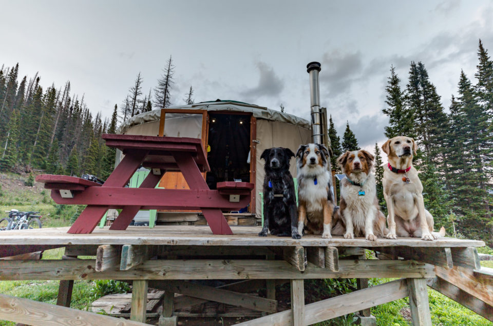 4 dogs at a yurt